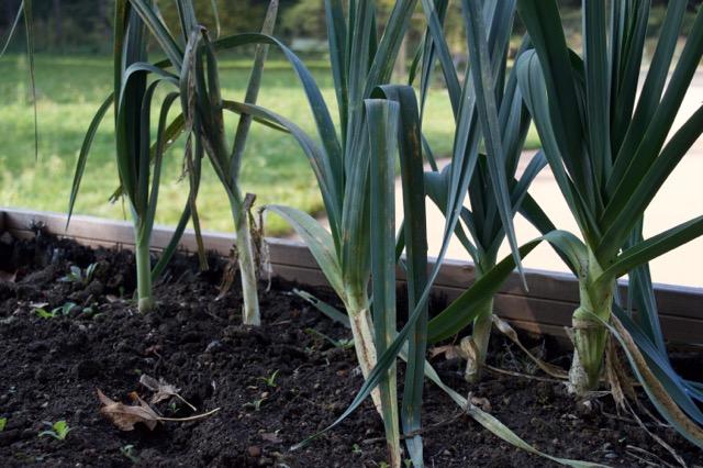 potager de Stephenson Garden