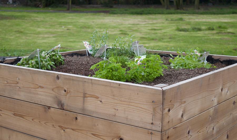 Le potager - Stephenson Garden