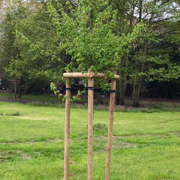 Notre jardin - Stephenson Garden